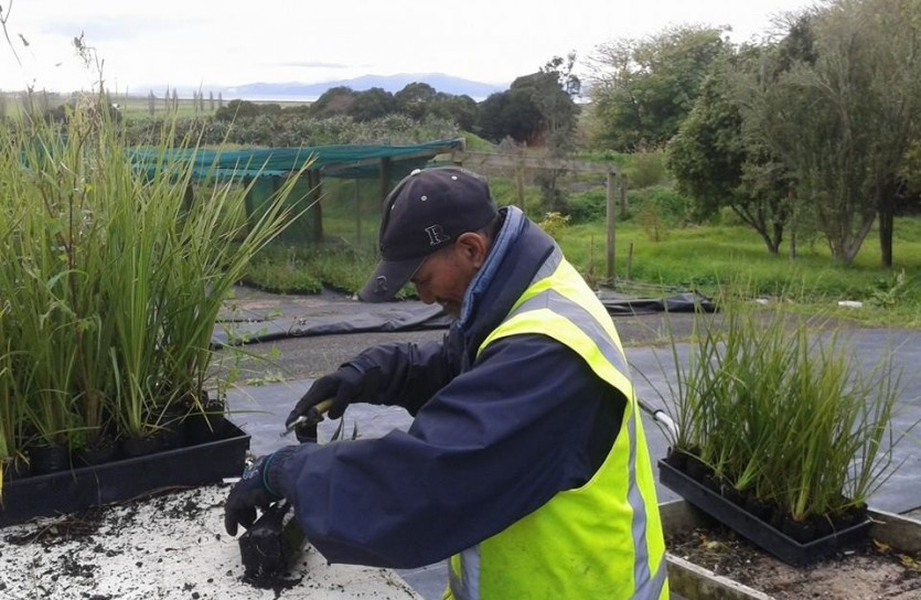 A trainee checks the quality of all plants being dispatched for an order. This builds accountability and a sense of pride in outcomes. Te Whangai focuses on capacity building to create future opportunities.